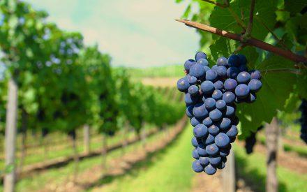 La subjetividad en el vino