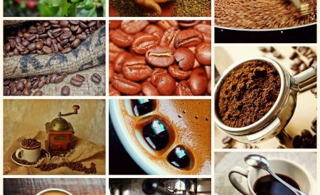 Técnicas de biocontrol para el incremento de la producción de café