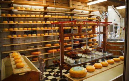 Ingeniería de Alimentos, una profesión de gran importancia actual y futura