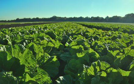 Agricultura y biopesticidas