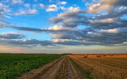 Conservación de la agrobiodiversidad como estrategia para la seguridad alimentaria, en Santa María Cuquila, Oaxaca