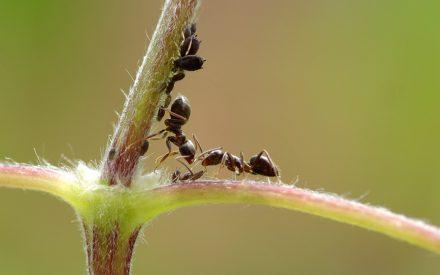 Estudio del comportamiento de forrajeo en especies de la familia Formicidae como método de clasificación de hormigas en la reserva natural parque Flor del Bosque