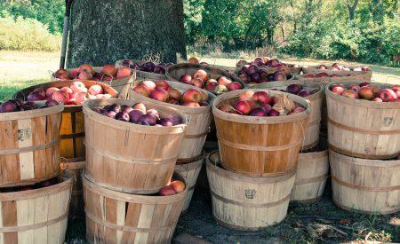 Los productos vegetales nativos y su atractivo comercial: antioxidantes