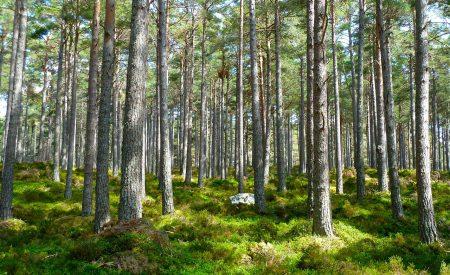 Co-creación de valor en el consumo verde y sustentable: ¿de qué color es tu conciencia?