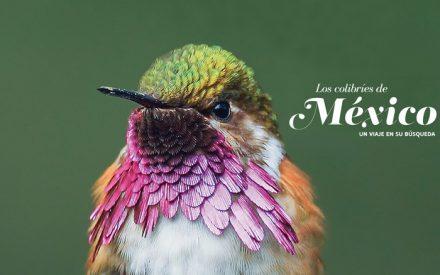 Los colibríes de México: Un viaje en su búsqueda