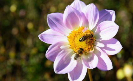Los insectos por la seguridad alimentaria