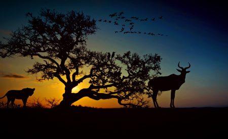 El turismo y los animales salvajes