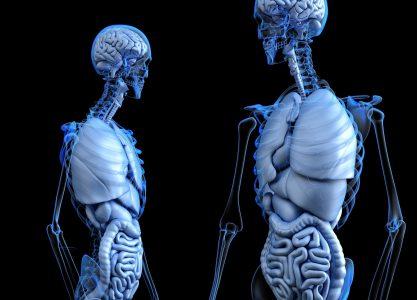 Ingeniería biomédica e impresión 3D