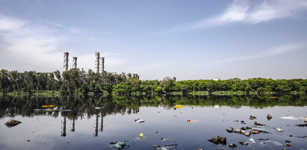 Desastre ambiental en el mar de Cortés