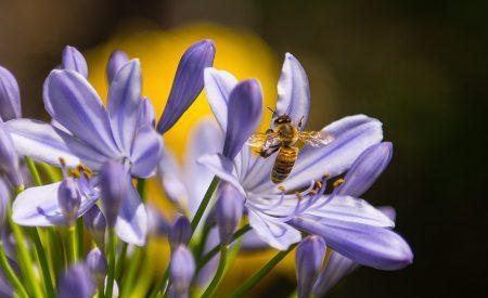 Las abejas son químicas extraordinarias