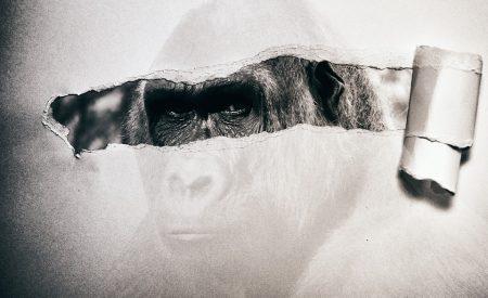 ¿Un gorila invisible?