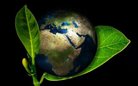 Los alimentos transgénicos y su impacto socio ambiental.