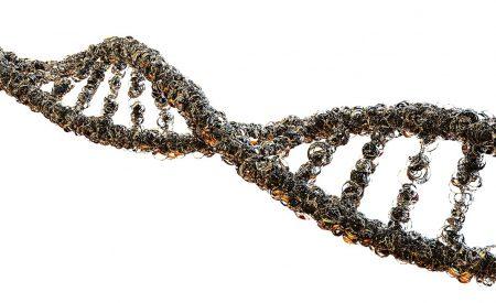 ¿Qué es la Nanobiotecnología?