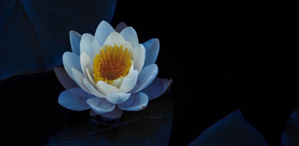 Los secretos detrás de la flor de loto: nanotecnología inspirada en la naturaleza.