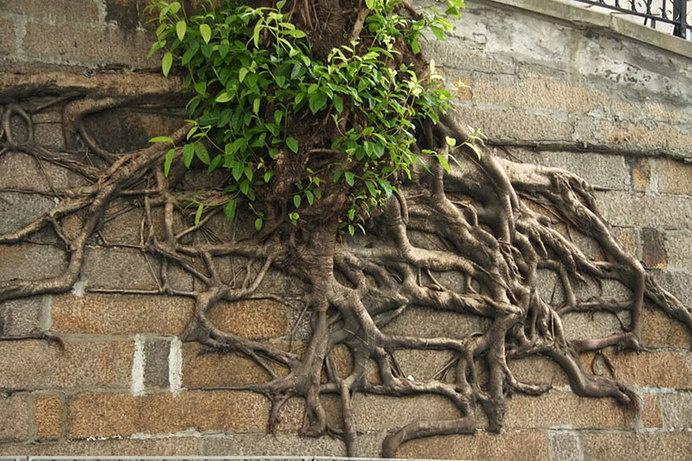 Creatividad en plantas