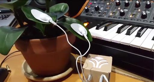 PlantWave Musica para PLantas